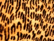 leopard skin - powerpoint graphics