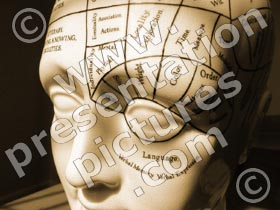 phrenology head - powerpoint graphics